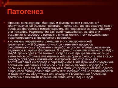 Патогенез Процесс прикрепления бактерий и фагоцитоз при хронической гранулема...