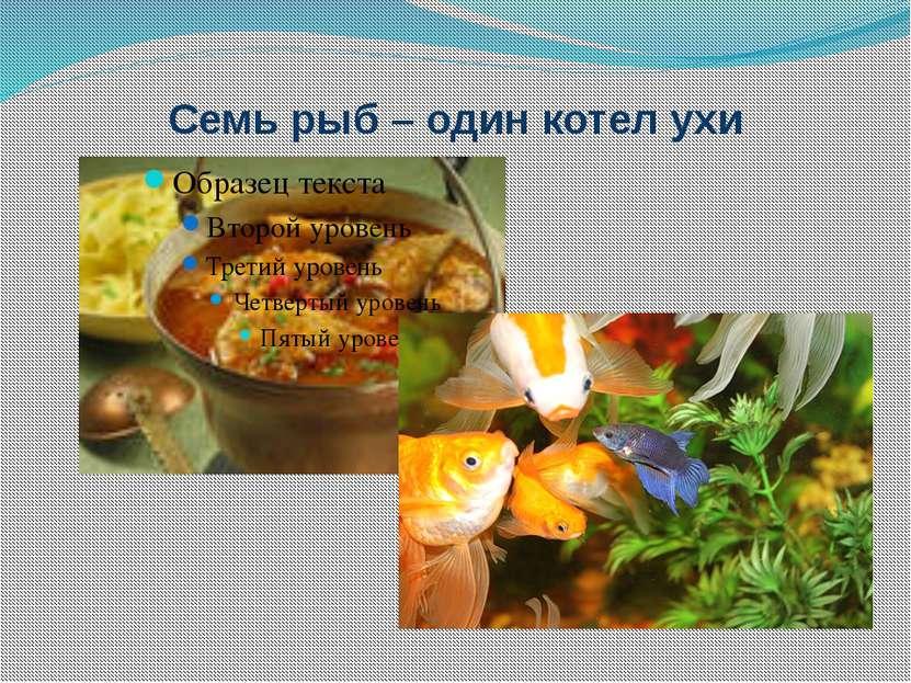 Семь рыб – один котел ухи