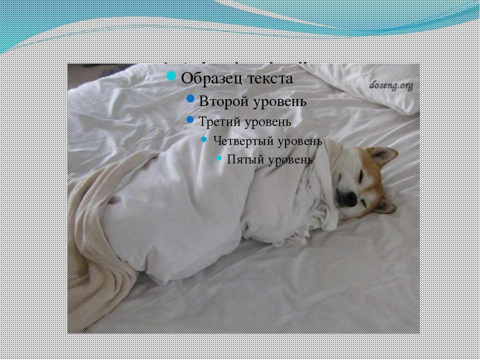 Let sleeping dog lie