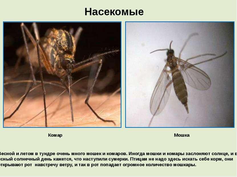 Насекомые Комар Мошка Весной и летом в тундре очень много мошек и комаров. Ин...