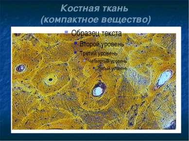 Костная ткань (компактное вещество)