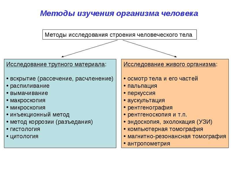Методы изучения организма человека Методы исследования строения человеческого...