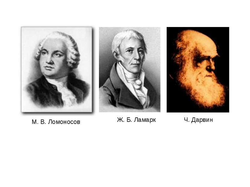 М. В. Ломоносов Ж. Б. Ламарк Ч. Дарвин