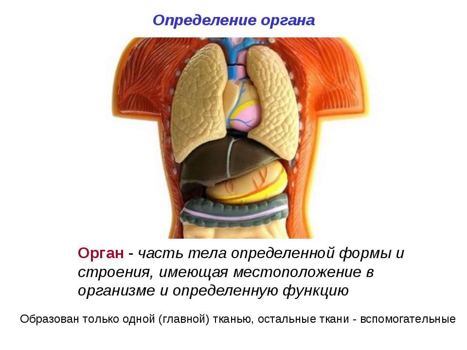 Определение органа Орган - часть тела определенной формы и строения, имеющая ...