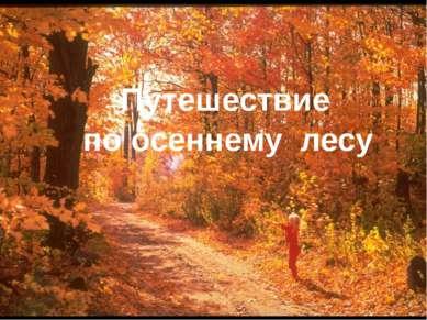 по осеннему лесу Путешествие