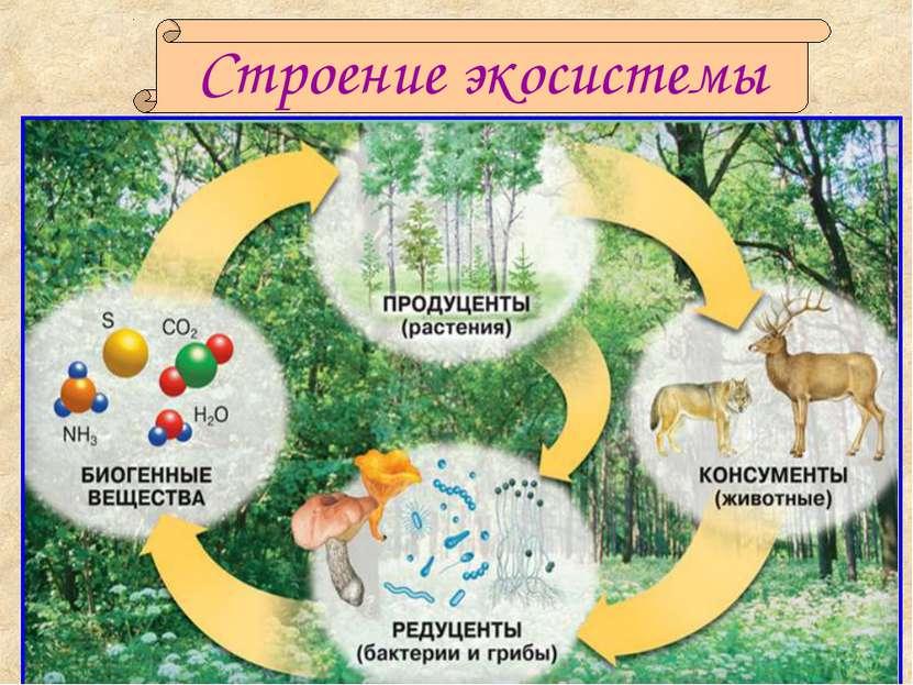 вакансий биоразнобразие зимнего садаи формирование его устойчивоти счастливые