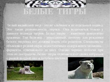 Белый индийский тигр - это не альбинос и не отдельный подвид. Это такая раз...
