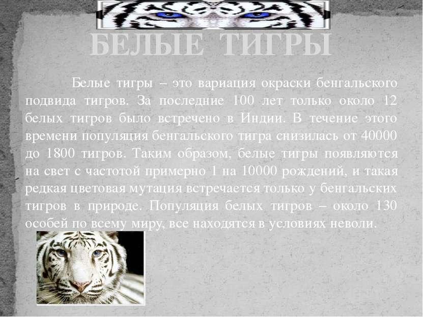 Белые тигры – это вариация окраски бенгальского подвида тигров. За последние ...