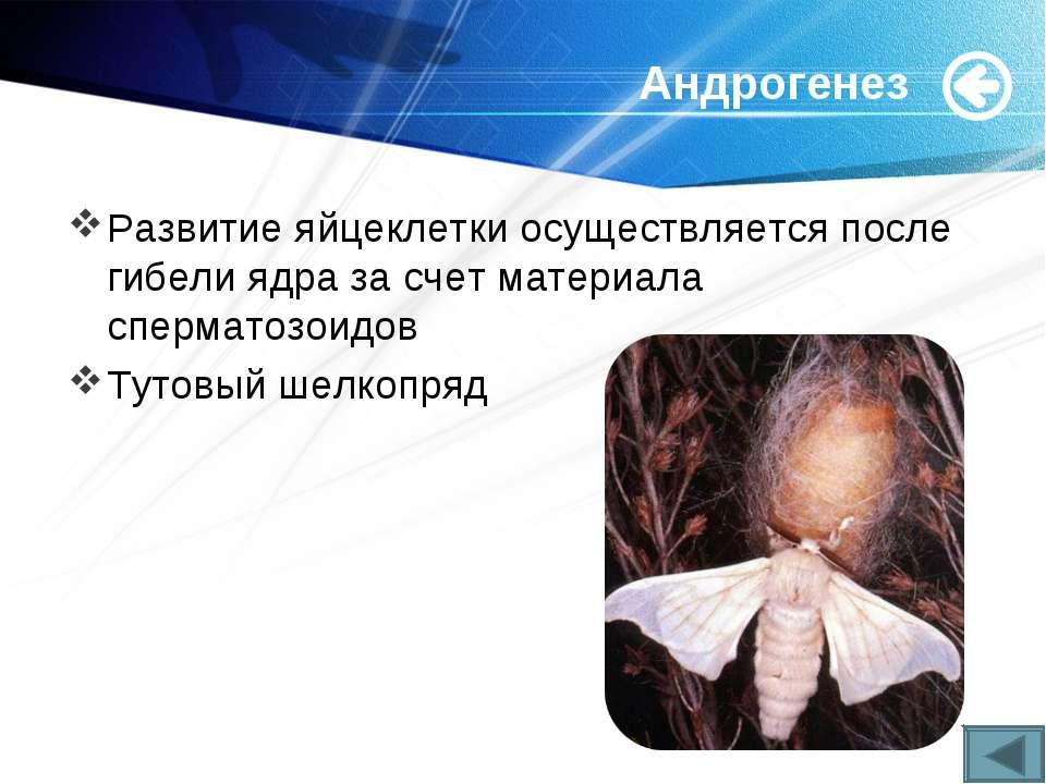 Андрогенез Развитие яйцеклетки осуществляется после гибели ядра за счет матер...