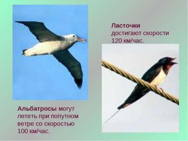 Альбатросы могут лететь при попутном ветре со скоростью 100 км/час. Ласточки ...