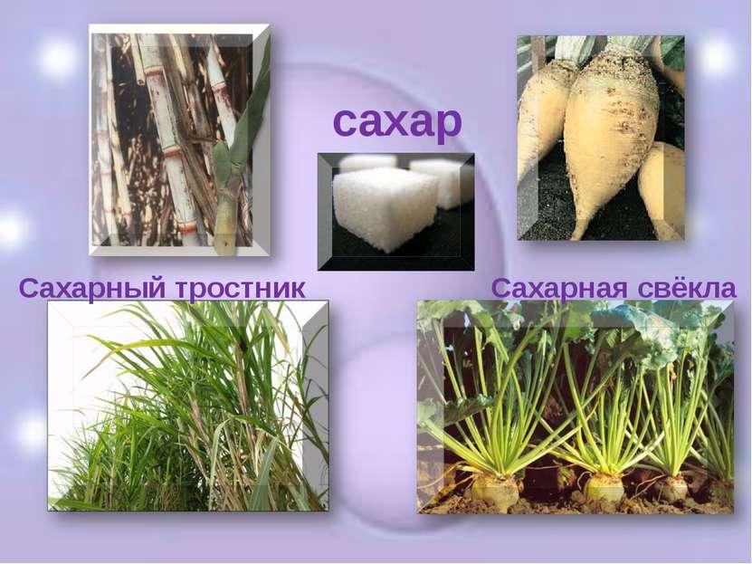 сахар Сахарный тростник Сахарная свёкла