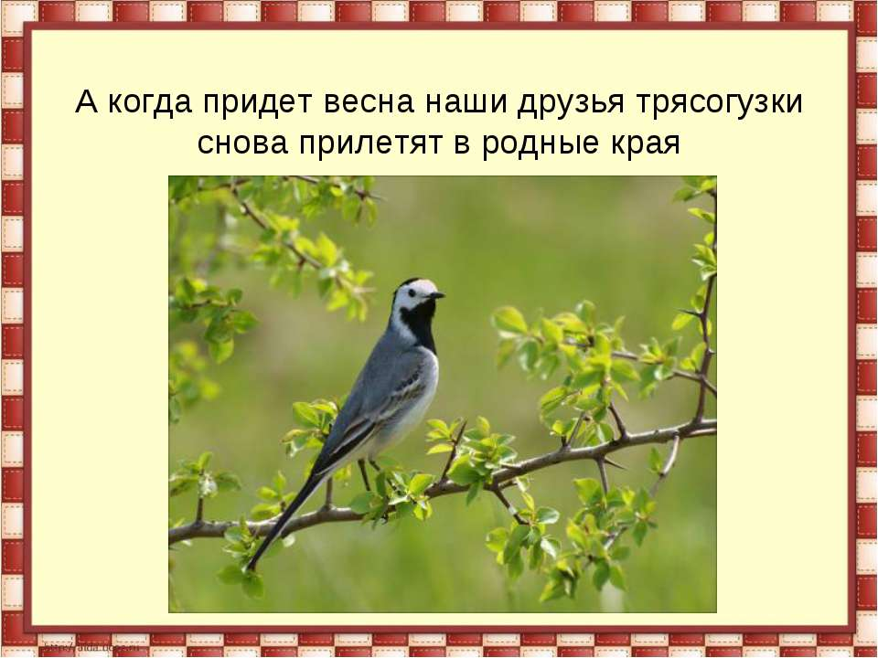 А когда придет весна наши друзья трясогузки снова прилетят в родные края