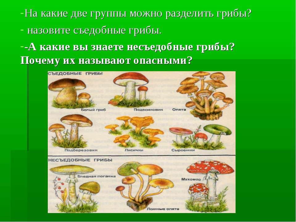 На какие две группы можно разделить грибы? назовите съедобные грибы. -А какие...