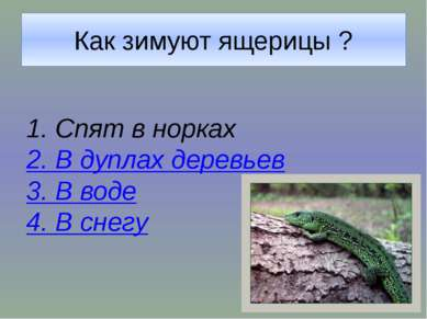 Как зимуют ящерицы ?