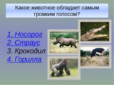 Какое животное обладает самым громким голосом?
