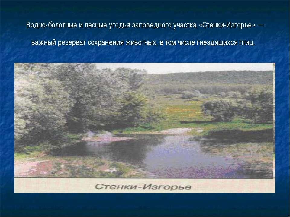 Водно-болотные и лесные угодья заповедного участка «Стенки-Изгорье» — важный ...