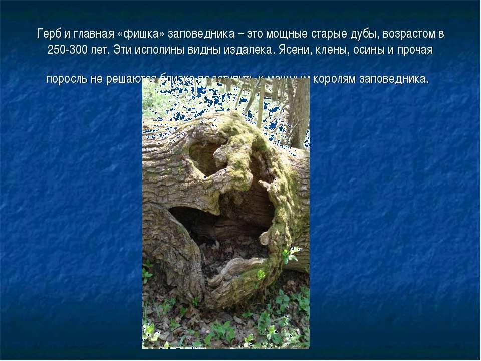 Герб и главная «фишка» заповедника – это мощные старые дубы, возрастом в 250-...