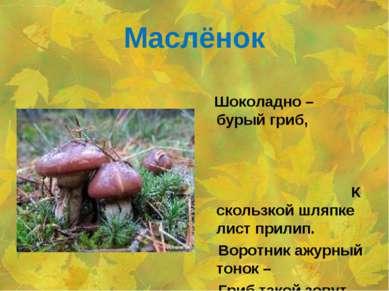 Маслёнок Шоколадно – бурый гриб, К скользкой шляпке лист прилип. Воротник ажу...