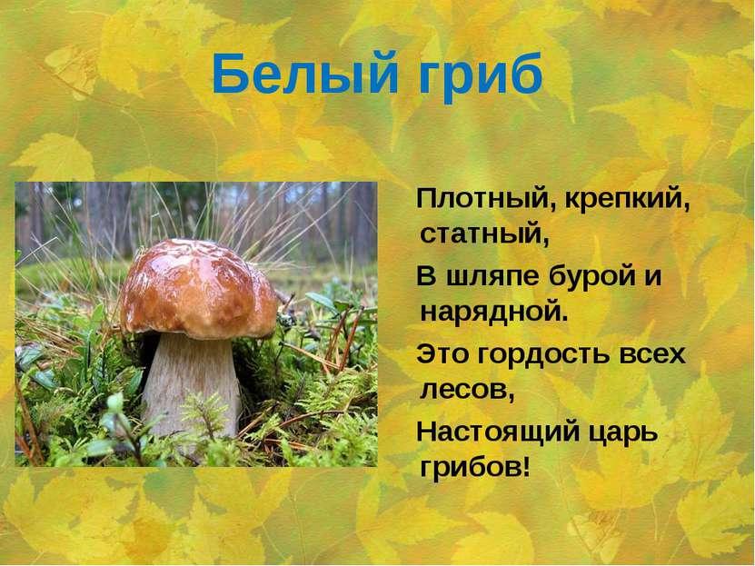 Белый гриб Плотный, крепкий, статный, В шляпе бурой и нарядной. Это гордость ...