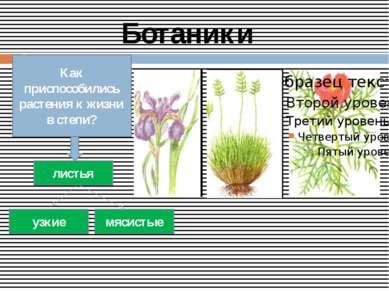 Ботаники Как приспособились растения к жизни в степи? листья узкие мясистые