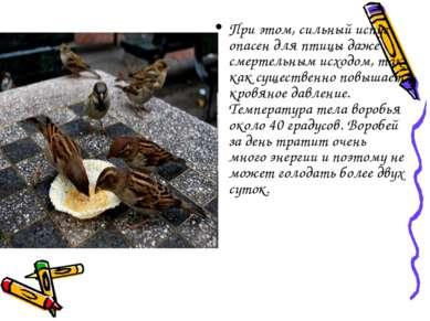 При этом, сильный испуг опасен для птицы даже смертельным исходом, так как су...
