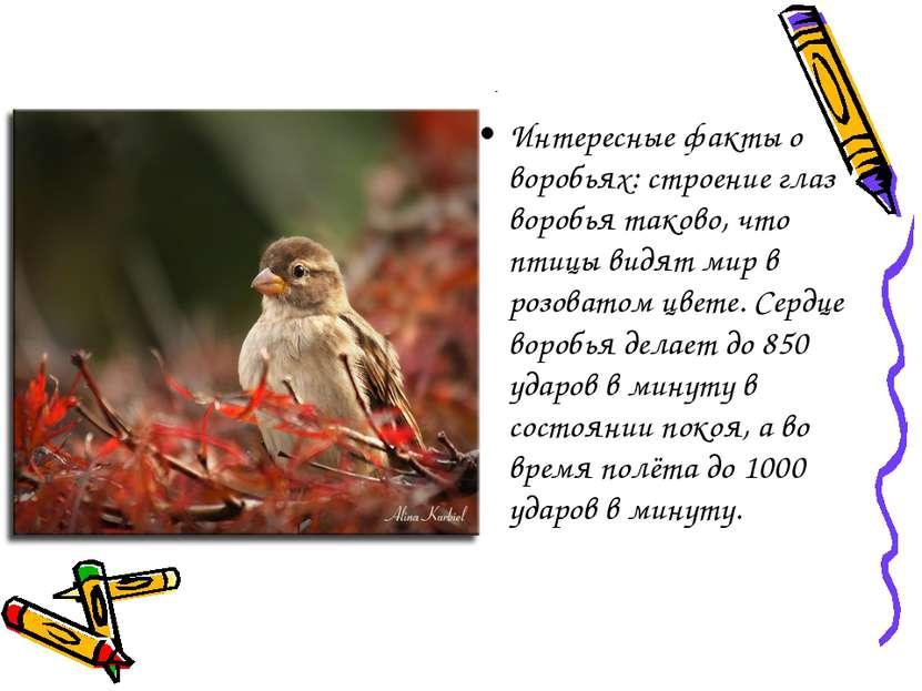 Интересные факты о воробьях: строение глаз воробья таково, что птицы видят ми...