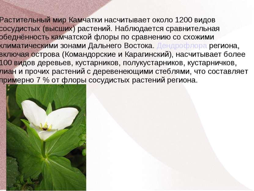 Растительный мир Камчатки насчитывает около 1200 видов сосудистых (высших) ра...