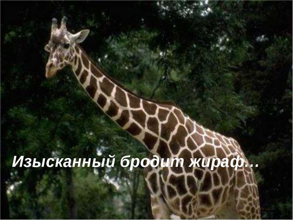 Изысканный бродит жираф…