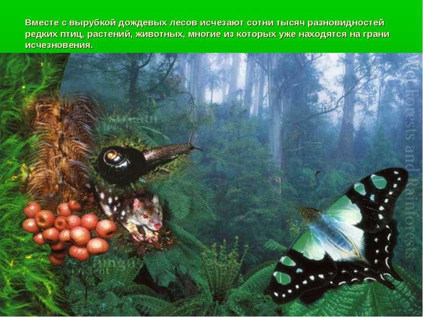 Вместе с вырубкой дождевых лесов исчезают сотни тысяч разновидностей редких п...