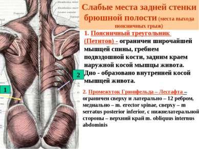 1. Поясничный треугольник (Петитов) - ограничен широчайшей мышцей спины, греб...