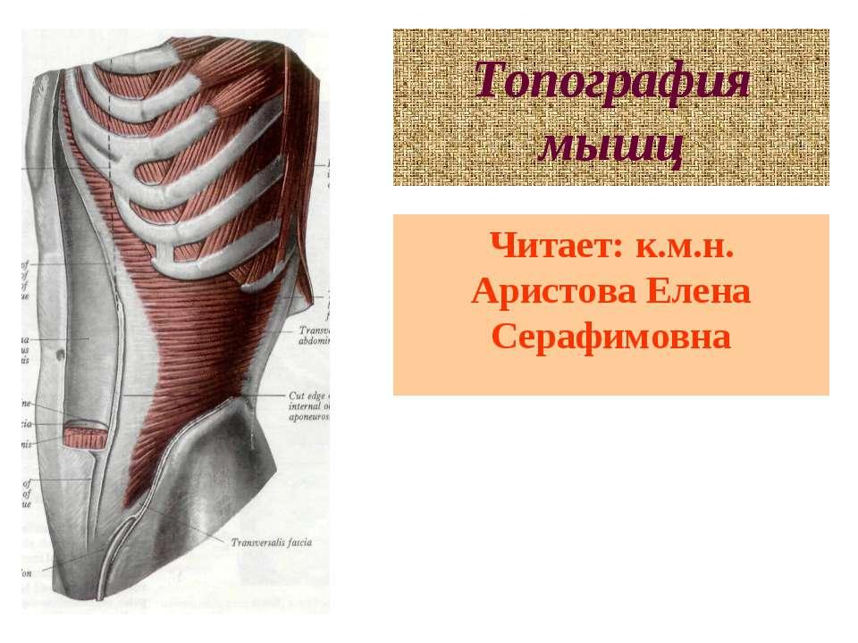 Топография мышц Читает: к.м.н. Аристова Елена Серафимовна