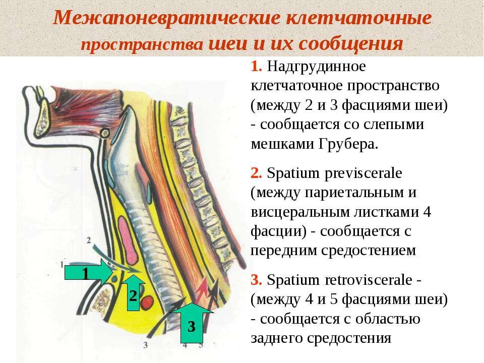 Межапоневратические клетчаточные пространства шеи и их сообщения 1. Надгрудин...