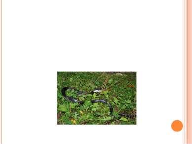 Змеи в лесу шипели: sh - sh - sh