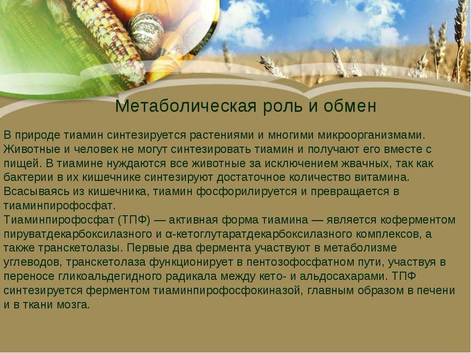 Метаболическая роль и обмен В природе тиамин синтезируется растениями и многи...