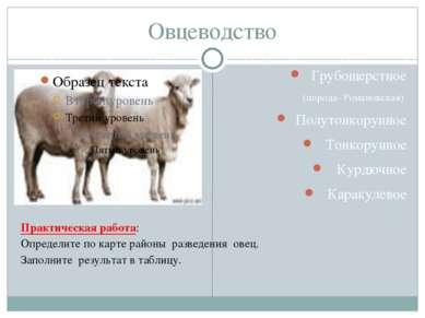 Овцеводство Грубошерстное (порода- Романовская) Полутонкорунное Тонкорунное К...