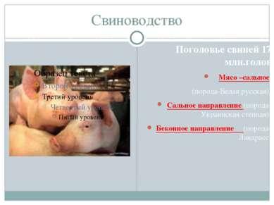 Свиноводство Поголовье свиней 17 млн.голов Мясо –сальное (порода-Белая русска...