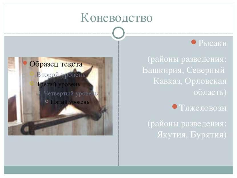 Коневодство Рысаки (районы разведения: Башкирия, Северный Кавказ, Орловская о...