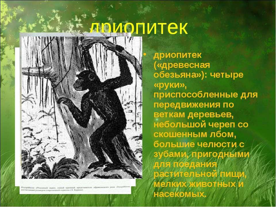 дриопитек дриопитек («древесная обезьяна»): четыре «руки», приспособленные дл...