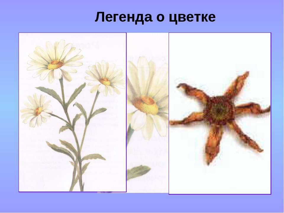 Легенда о цветке