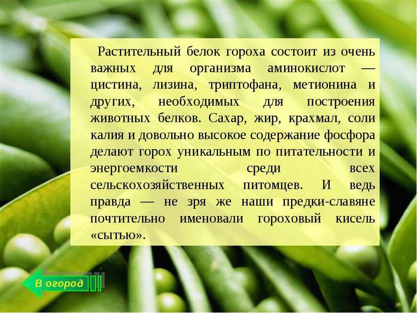 В огород Растительный белок гороха состоит из очень важных для организма амин...