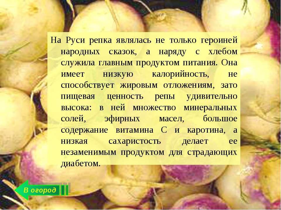 В огород На Руси репка являлась не только героиней народных сказок, а наряду ...