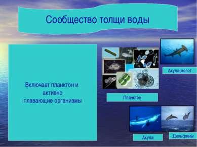 Сообщество толщи воды Акула-молот Акула Дельфины Планктон Включает планктон и...