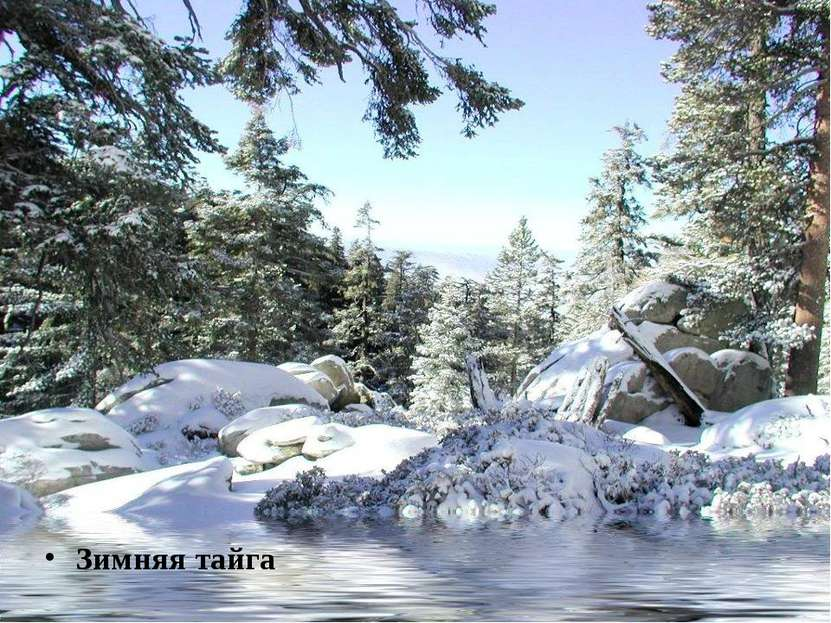 Зимняя тайга