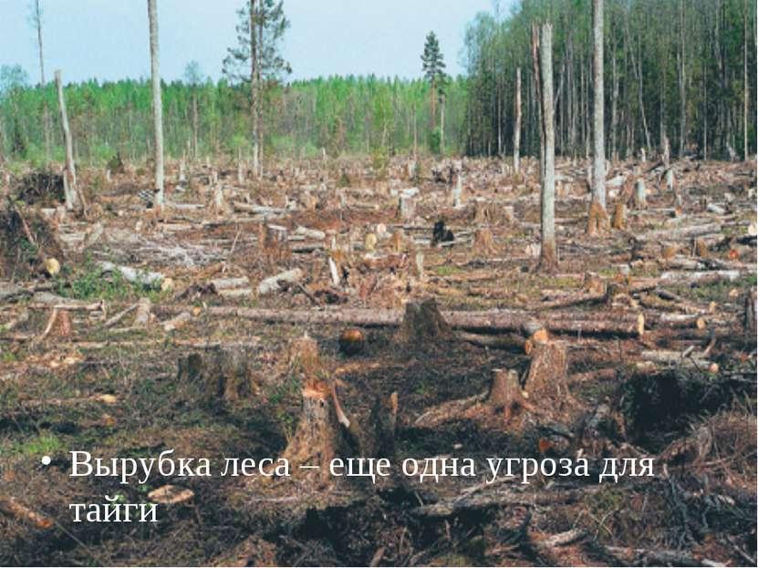 Вырубка леса – еще одна угроза для тайги