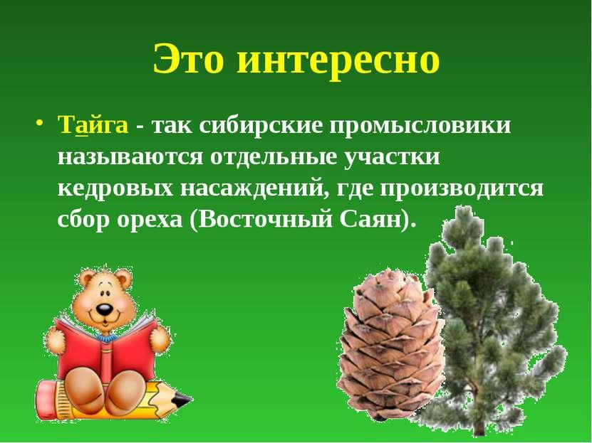 Это интересно Тайга - так сибирские промысловики называются отдельные участки...
