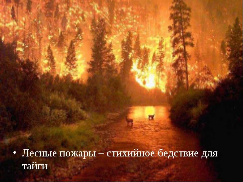 Лесные пожары – стихийное бедствие для тайги