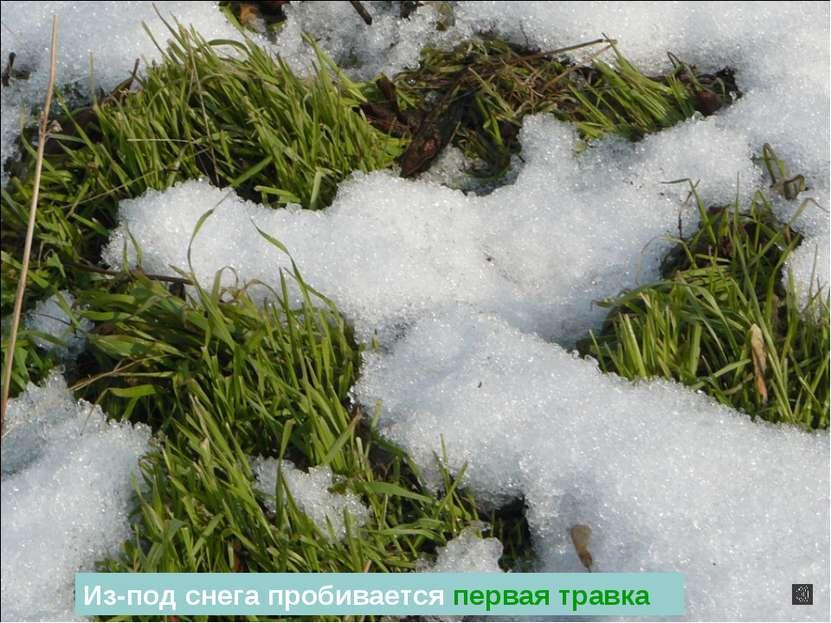 Из-под снега пробивается первая травка