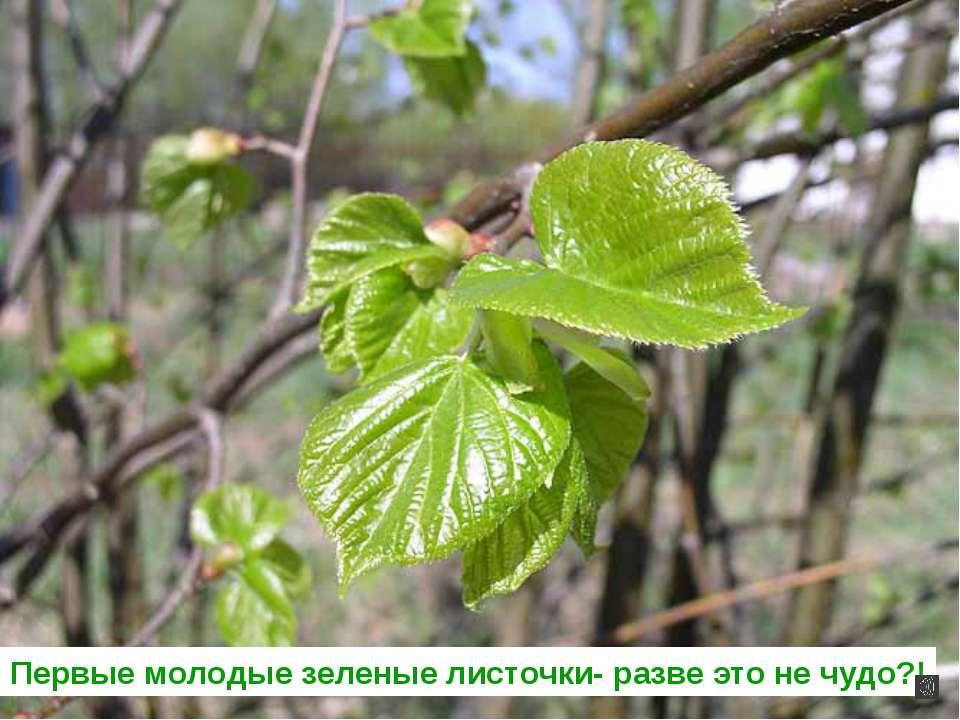 Первые молодые зеленые листочки- разве это не чудо?!
