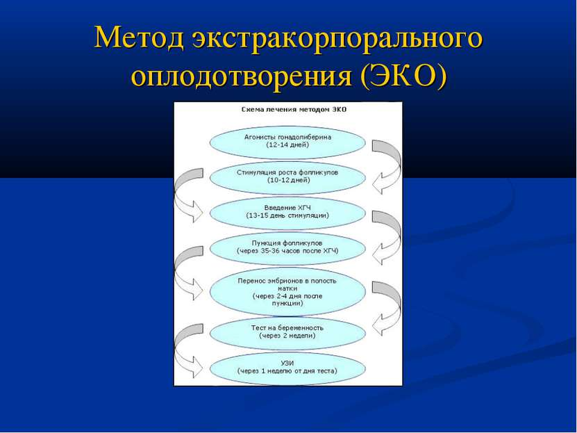 Метод экстракорпорального оплодотворения (ЭКО)