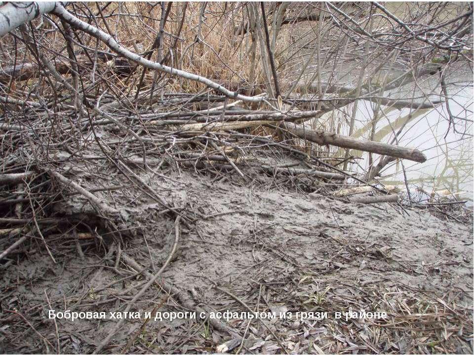 Бобровая хатка и дороги с асфальтом из грязи в районе